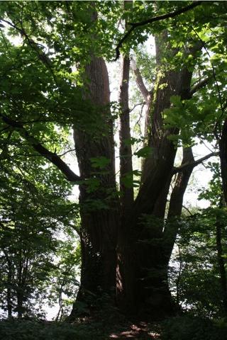 arbres1.jpg