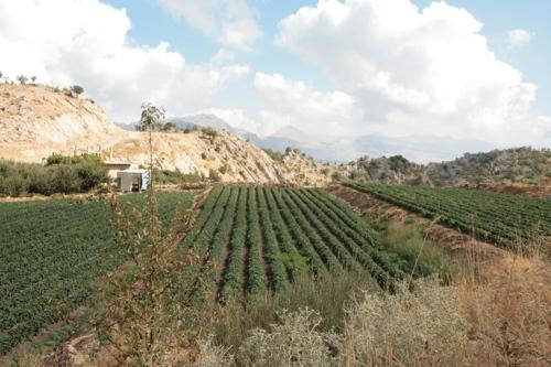 Vallée entre Faraya et Afqa