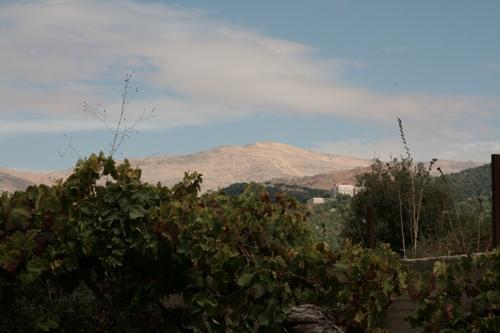Vue des Monts du Liban qui domine la région, l'hiver ce sommet est blanc et les skieurs s'adonnent à leur sport.