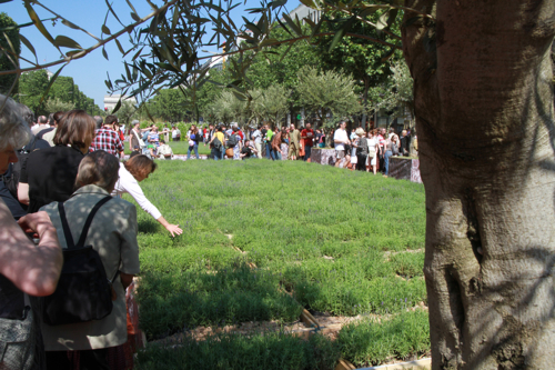 Il faisait chaud ce dimanche matin et l'ombre des oliviers est bienvenue.