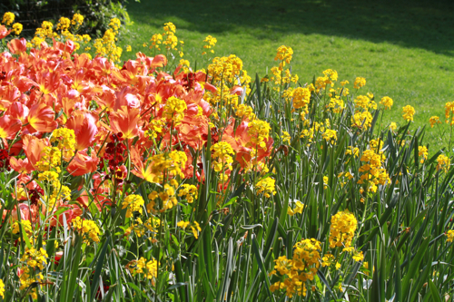Au printemps en parcourant le parc toutes les couleurs se mélangent.