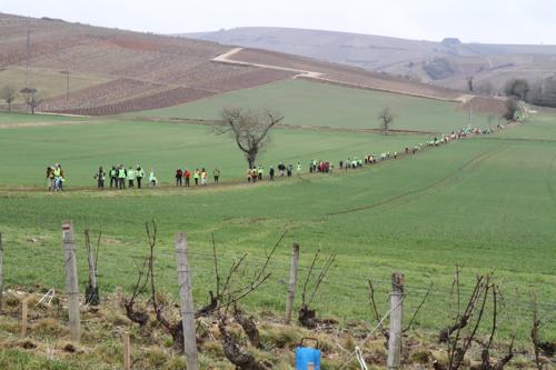 Le long cheminement des marcheurs dans les vignobles de Sancerre.