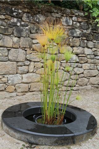 Un indice dans la cour du Musée... une plante d'Egypte, le papyrus.