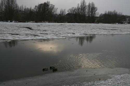 Les canards ne semblent pas trop frigorifiés