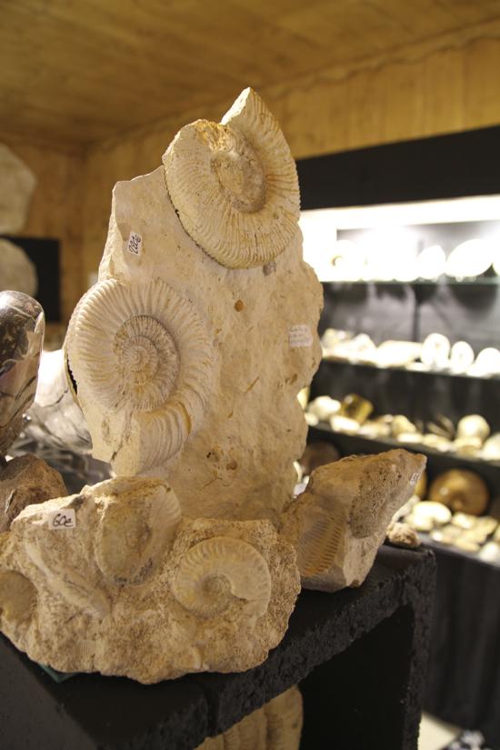Nous admirons des fossiles majestueux