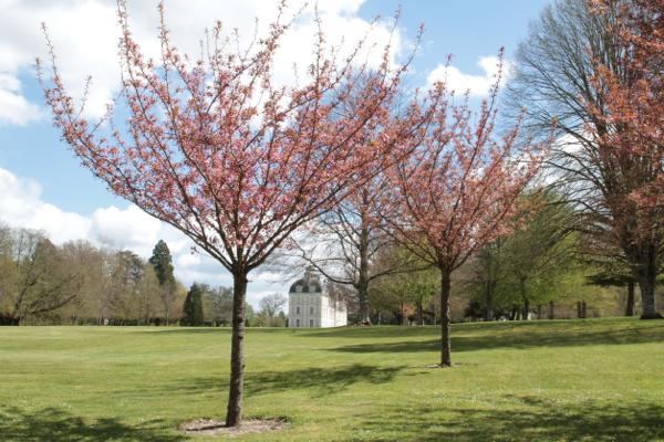 C'est le printemps qui fleurit le château.