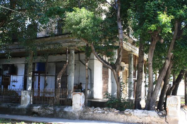 La Havane c'est aussi une verdure triomphante faute de restauration de ces villas.