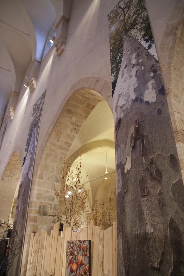 Chênes triomphants dans la nef de la Collégiale