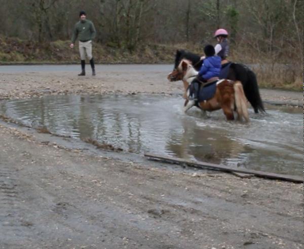"""Forcer le poney à y aller """"c'est vous le maître"""". Ne pas s'arrêter car le poney voudra se coucher dans l'eau ...."""