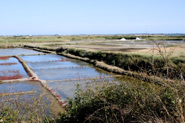 Les marais salants de Guérande, ces marais qui renaissent depuis 1970