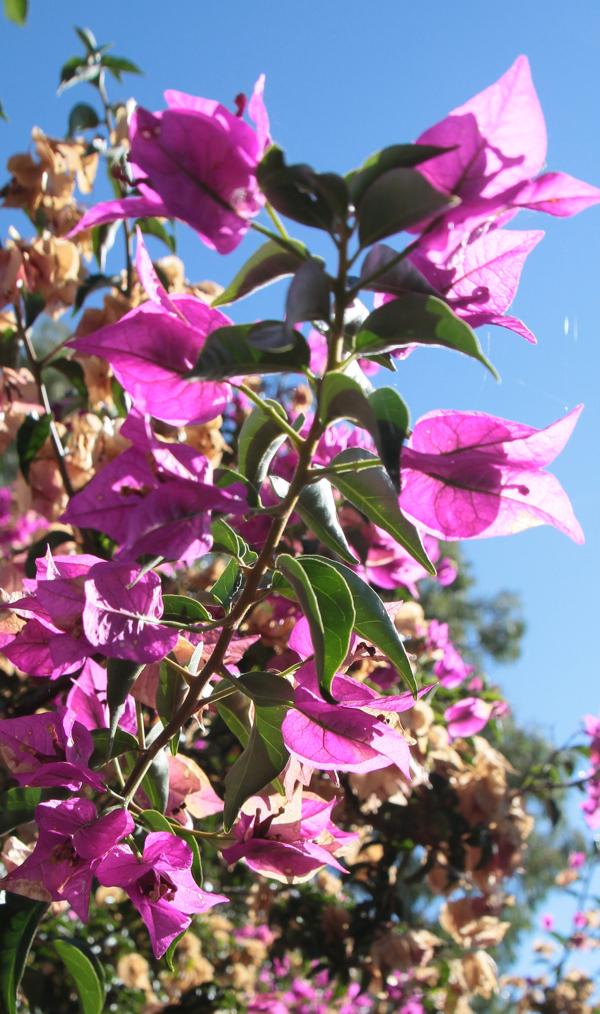 Toutes les fleurs semblent honorer le soleil qui leur donne leur couleur... comme des jeunes filles fières de leur bronzage de velours.