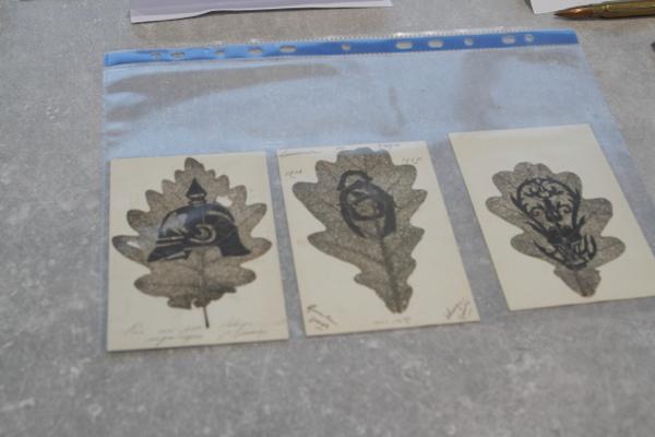 Cartes postales confectionnées à l'aide d'une feuille de chêne perforée de multiples trous.